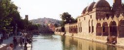 Pool_of_Sacred_Fish_Urfa_Turkey